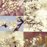 Blossoming tree in spring  - vintage set Stock Image