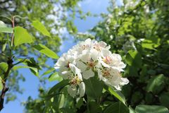The blossoming tree in the spring stock photo
