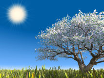 Blossoming tree and sun. Blossoming tree on a meadow. Cherry a tree with colors Stock Photos