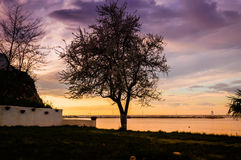 Blossoming Tree On The Sunset Shoreline Royalty Free Stock Image