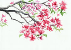 Blossoming tree watercolor painting Royalty Free Stock Photography