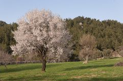 Blossoming trees in spring Stock Photography