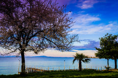 Blossoming Trees On The Sunset Shoreline Stock Photo