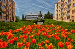 Blossoming tulip flower in the city of Zvolen. At Namestie slobody square during spring, Europe, Slovakia royalty free stock photo