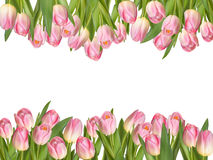 Blossoming tulips decorative border. EPS 10 Stock Photography