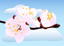 Blossoming twig. Of spring fruit tree on blue sky background (rasterize from vector Royalty Free Stock Photography