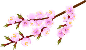 Blossoming twig Royalty Free Stock Photos