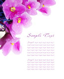 Blossoming violets. Pattern of a card with blossoming violets Royalty Free Stock Images