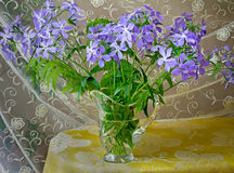 Blossoming violets in a crystal vase. Stock Photo