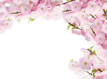 Blossoming white  tree Flowers Stock Image