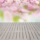 Blossoming white  tree Flowers Stock Photos