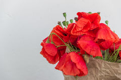 Blossoming wild poppies on a light background. Royalty Free Stock Images