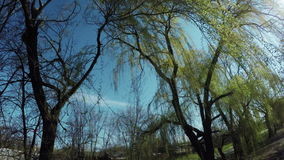 Blossoming willow on nature stock footage