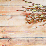 Blossoming willow twigson board Stock Photography