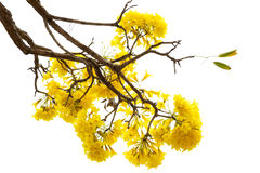blossoming yellow flower Stock Photography