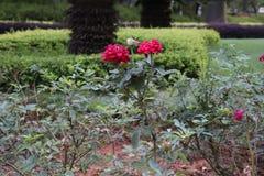 Blossomness dei fiori immagine stock