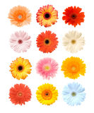 Blossoms. The picture shows colourful background with blossoms of gerbera royalty free illustration