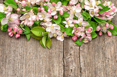 Blossoms of apple tree flowers on wooden background Stock Photo