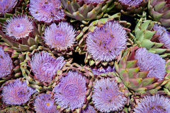 Blossoms of artichokes at a market Stock Image