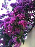 Blossoms. Beautiful flowers blooming on a tree Royalty Free Stock Photos