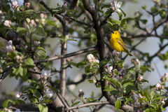Blossoms and bird Stock Photography
