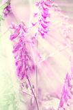 Blossoms and bokeh pastel illustration Stock Image