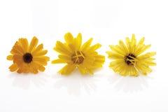 Blossoms of calendulas (Calendula officinalis) Stock Photos