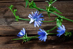 Blossoms of chicory on wood Royalty Free Stock Images