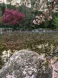 Blossoms cover a pond in spring Stock Image