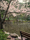 Blossoms cover a pond in spring Royalty Free Stock Photography