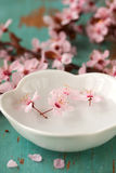Blossoms in Dish Stock Image