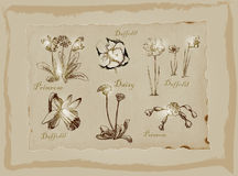 Blossoms and Flowers - An hand drawn pack. Freehand drawing. An hand drawn pack, Blossoms and Flowers. Description - Vectors, Freehand sketching. Background is Royalty Free Stock Images