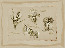Blossoms and Flowers - An hand drawn pack. Freehand drawing. Royalty Free Stock Images