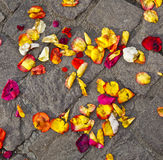Blossoms of flowers lying on the ground after a wedding ceremony Royalty Free Stock Photo
