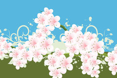 Blossoms Illustration Royalty Free Stock Image