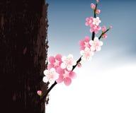 Blossoms Illustration Stock Image