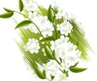 Blossoms Illustration Stock Photos