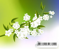 Blossoms Illustration Royalty Free Stock Photography