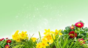 Spring meadow, flower meadow before Bokeh Royalty Free Stock Photos