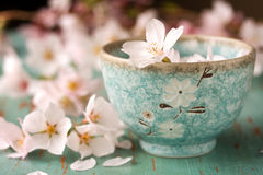 Blossoms in small dish Stock Photography