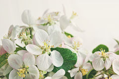 Blossoms on soft white background Stock Images