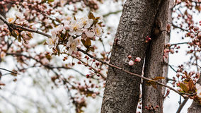 Blossoms. Spring blossoms near a supermarket stock photo