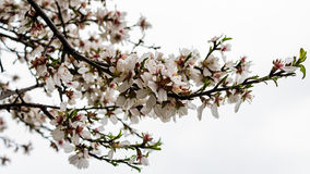 Blossoms. Spring blossoms near a supermarket. The background was not removed royalty free stock photos