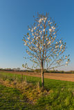 Blossoms in spring. Tree in bloom during spring stock photography