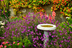 Blossoms Surrounding Bird Bath Royalty Free Stock Image