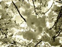 Blossum Stock Image