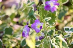 Blossumbloem Royalty-vrije Stock Foto
