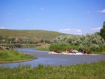 Blote Indiërs die de Little Bighornrivier smeden stock foto's
