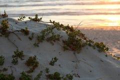 Blouberg Dune Stock Images