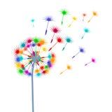 Blow-ball colorido Fotografía de archivo libre de regalías